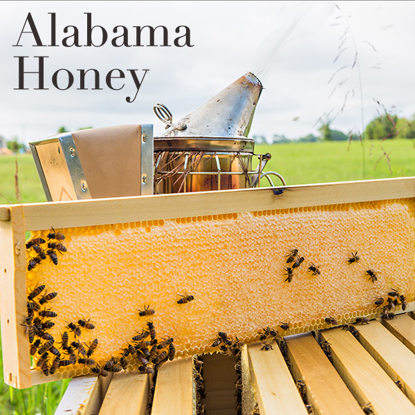 North Alabama Honey
