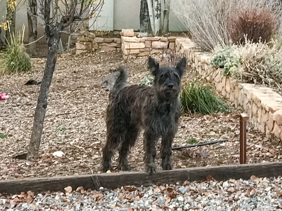 Missing Dog near Durango Colorado - REWARD